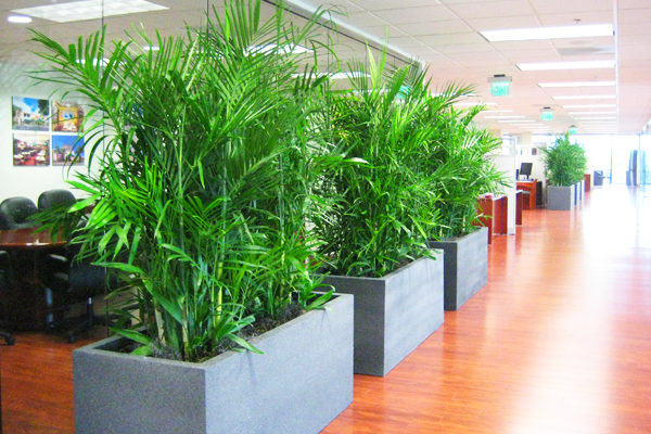 10 Great Indoor Plants For Your Office Outboxd
